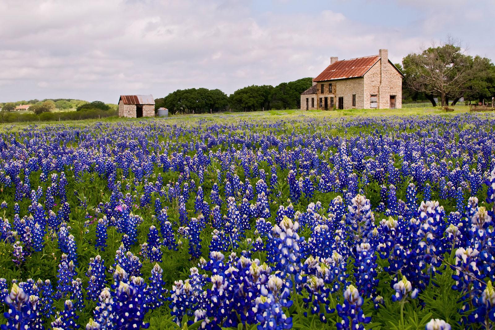Worth Ross Texas